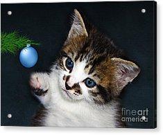 Gorgeous Christmas Kitten Acrylic Print