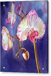 Gorgeous Orchid Acrylic Print by Irina Sztukowski