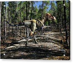 Gorgosaurus Libratus Dinosaur Acrylic Print