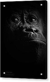 Gorilla Acrylic Print by Christine Sponchia