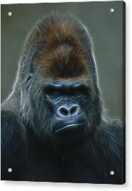 Gorilla Digital Art Acrylic Print