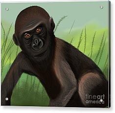 Gorilla Greatness Acrylic Print
