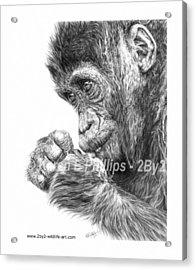 Gorilla Infant Acrylic Print by Karen E Phillips