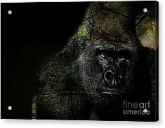 Gorilla Acrylic Print by Marvin Blaine