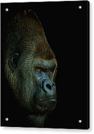 Gorilla Portrait Digital Art Acrylic Print