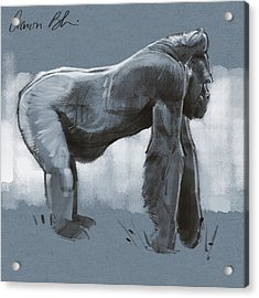Acrylic Print featuring the digital art Gorilla Sketch by Aaron Blaise