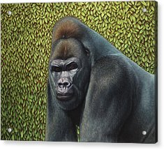 Gorilla With A Hedge Acrylic Print by James W Johnson