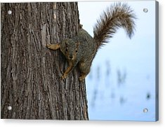 Acrylic Print featuring the photograph Lookin' For Nuts by Christy Pooschke