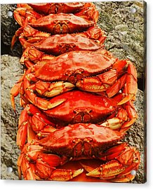 Acrylic Print featuring the photograph Got Crab? by Karen Horn