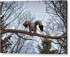 Got You - Great American Bald Eagle Acrylic Print by Gary Smith