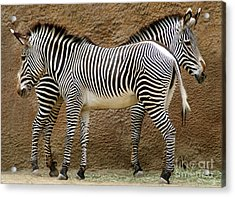 Got Your Back Acrylic Print by Dan Holm