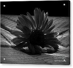 Gothic Birthday Flower Bw Acrylic Print by Chalet Roome-Rigdon