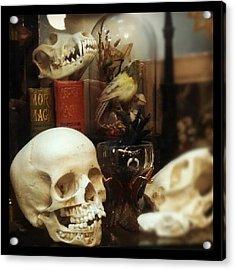 Gothic Curio Acrylic Print