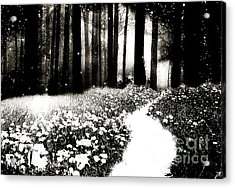 Gothic Dark Black White Surreal Woodlands Path Acrylic Print