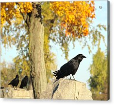 Three Ravens On A Gothic Graveyard Day Acrylic Print by Gothicrow Images