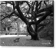 Gothic Surreal Black And White South Carolina Angel Oak Trees Park Landscape Acrylic Print by Kathy Fornal