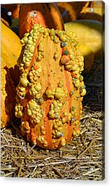 Gourd Acrylic Print by Carrie Cooper
