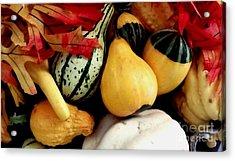 Gourd Group Of Fall's Bounty Acrylic Print