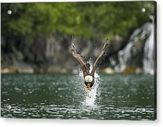 Apex Acrylic Print by Ted Raynor
