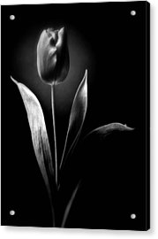 Black And White Tulips Flowers Art Work Photography Acrylic Print
