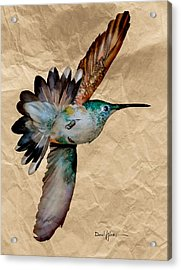 Da180 Grace Daniel Adams Acrylic Print