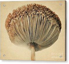 Grace Under Mushroom Acrylic Print