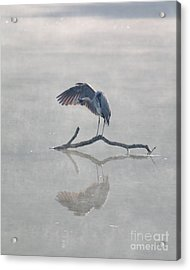 Acrylic Print featuring the photograph Graceful Heron by Anita Oakley