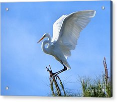 Acrylic Print featuring the photograph Graceful Landing by Deb Halloran