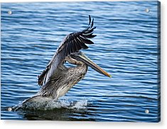 Acrylic Print featuring the photograph Graceful Landing by Gregg Southard