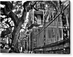 Graceful Old Oak And Fence One Acrylic Print by Andrew Crispi
