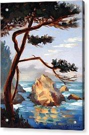 Graceful Pine Pt. Lobos Acrylic Print