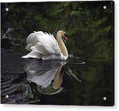Graceful Swan Acrylic Print by Elsa Marie Santoro