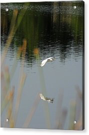 Graceful Acrylic Print by Teresa Schomig