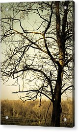 Graceful Tree Acrylic Print by Cara Moulds