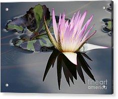 Graceful Water Lily Acrylic Print by Sabrina L Ryan
