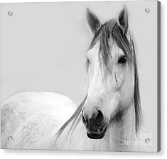 Gracie Grey Acrylic Print