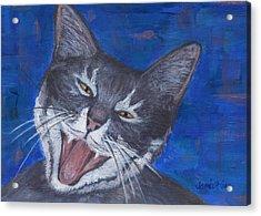 Gracie Happy Cat Acrylic Print by Jamie Frier