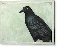Grackle Acrylic Print by James W Johnson