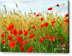 Grain And Poppy Field Acrylic Print