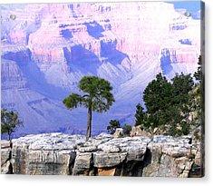 Grand Canyon 73 Acrylic Print by Will Borden