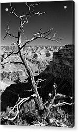 Grand Canyon Bw Acrylic Print