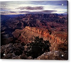 Grand Canyon Golden Ridgeback Acrylic Print