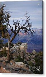 Grand Canyon Overlook Acrylic Print