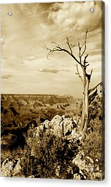 Grand Canyon Sepia Acrylic Print by T C Brown