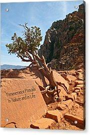 Grand Canyon Survivor Acrylic Print by Kathleen Scanlan