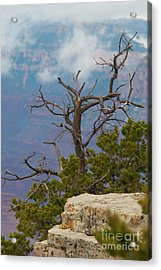 Acrylic Print featuring the photograph Grand Canyon Tree by Rod Wiens