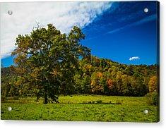 Grand Oak Acrylic Print