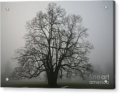 Grand Oak Tree Acrylic Print by Rich Collins