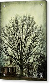 Grand Old Tree Acrylic Print
