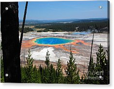 Grand Prismatic Spring From Hillside Acrylic Print